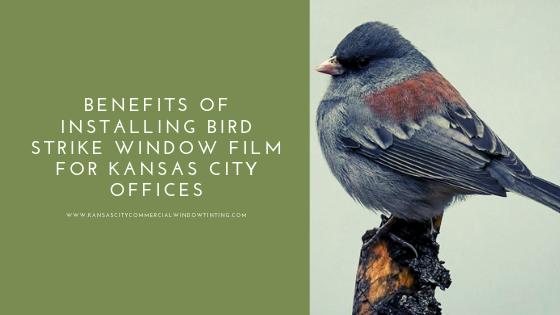 bird strike window film kansas city