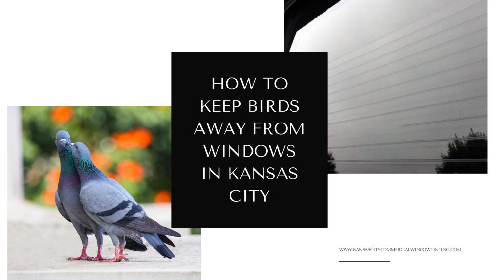keep birds away from windows kansas city
