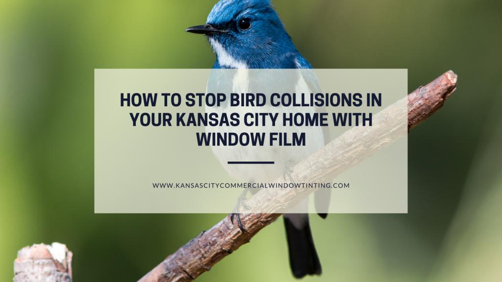 stop bird collisions kansas city window film